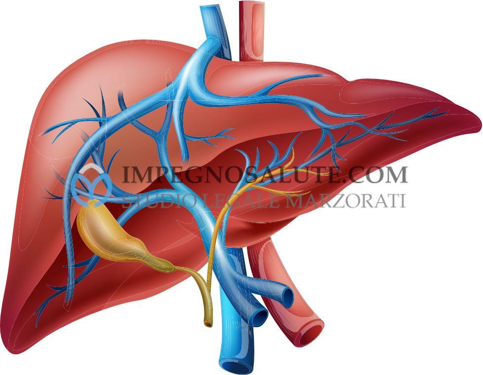 La chirurgia del fegato
