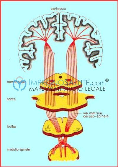 -dettaglio cervello