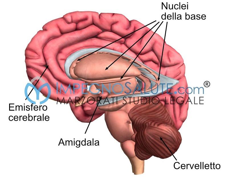Cervello nuclei base