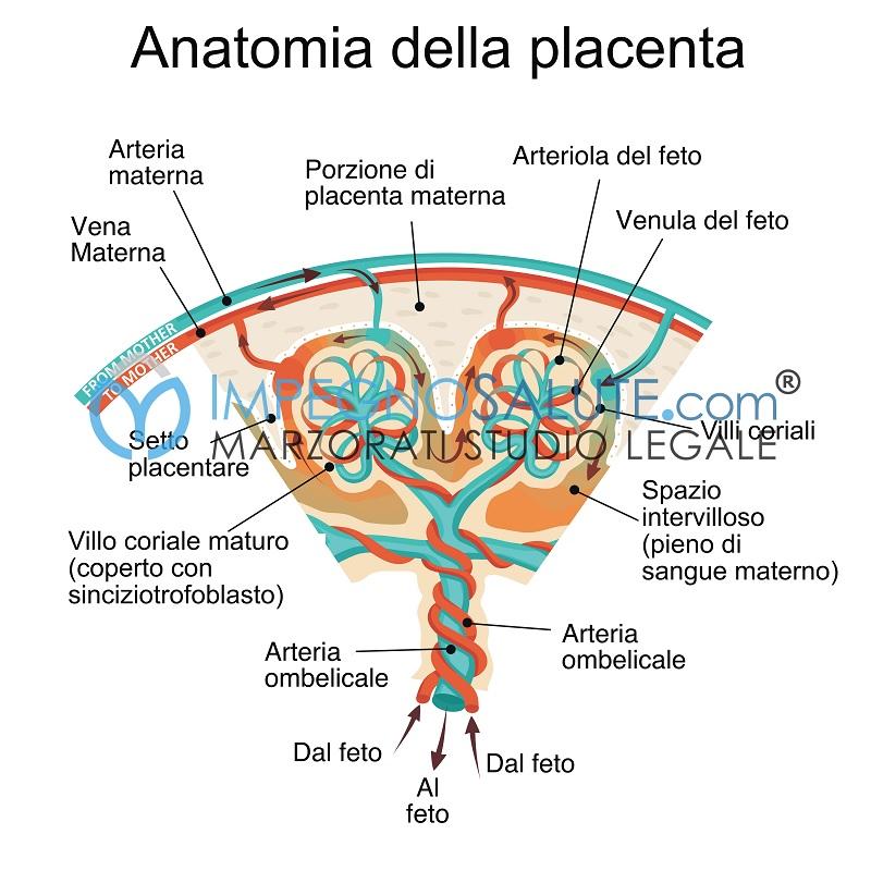 Ipossia perinatale